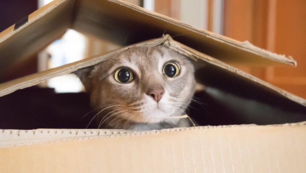 γατα μετακομιση